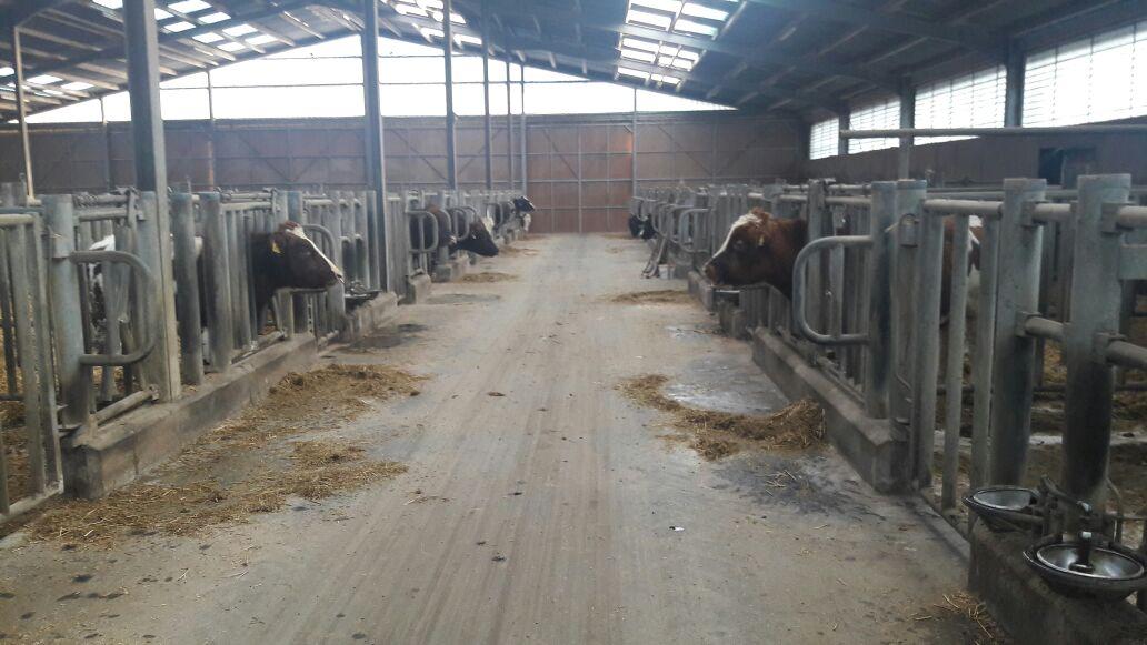 Bâtiment élevage